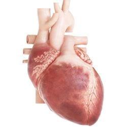 Cardiologo en San Luis Potosi Dr Josue Alejandro Silva v003 compressor