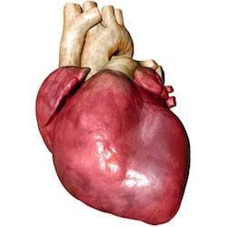 Cardiologo en San Luis Potosi Dr Josue Alejandro Silva v004 compressor