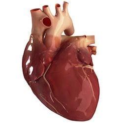Cardiologo en San Luis Potosi Dr Josue Alejandro Silva v005 compressor