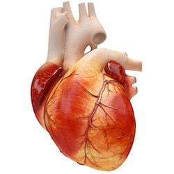 Cardiologo en San Luis Potosi Dr Josue Alejandro Silva v006 compressor