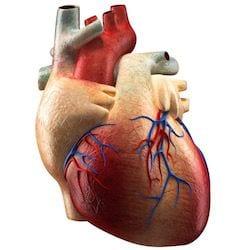 Cardiologo en San Luis Potosi Dr Josue Alejandro Silva v007 compressor